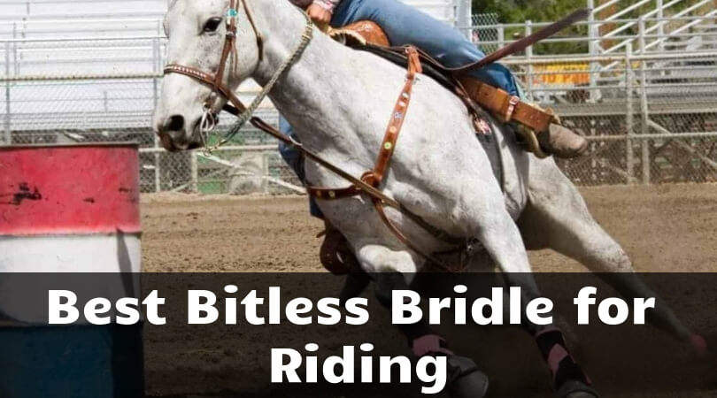 Best Bitless bridle for riding: Get it Now for your Horse